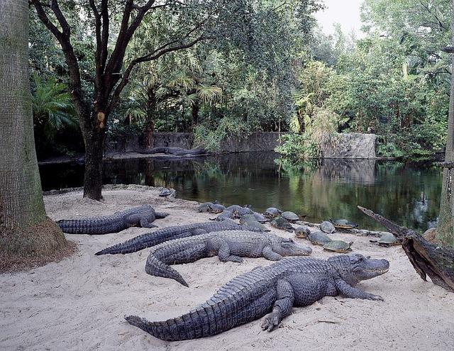Animal habitats at Busch Gardens in Tampa, Florida